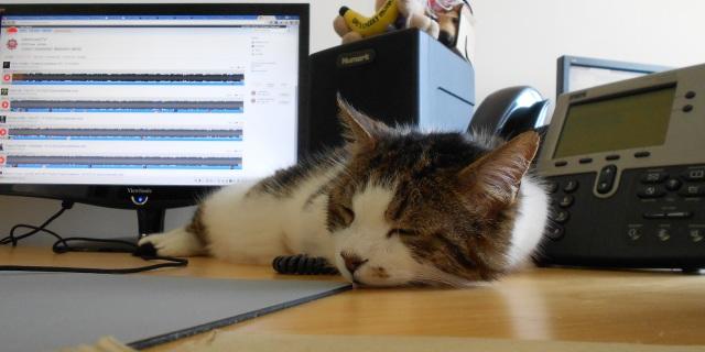 Gatti In Ufficio Per Aumentare la Produttività