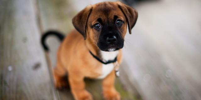 I Cani Sanno Riconoscere i Bugiardi e Perdere la Fiducia