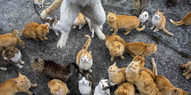 Isola dei Gatti: 6 Felini Per Ogni Abitante