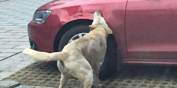 """Cane Preso a Calci in un Parcheggio: Torna con i suoi """"Amici"""" e si Vendica"""