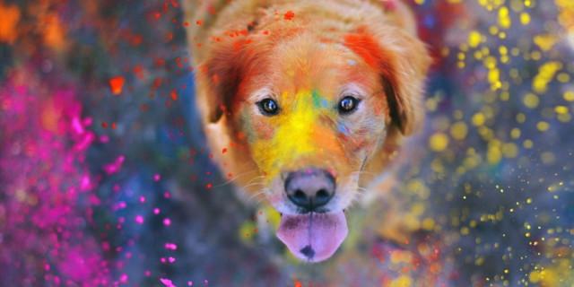 8 Curiosità sui Cani che Potresti Non Conoscere