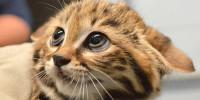 Il Lavoro dei Sogni: Il Coccolatore di Gatti