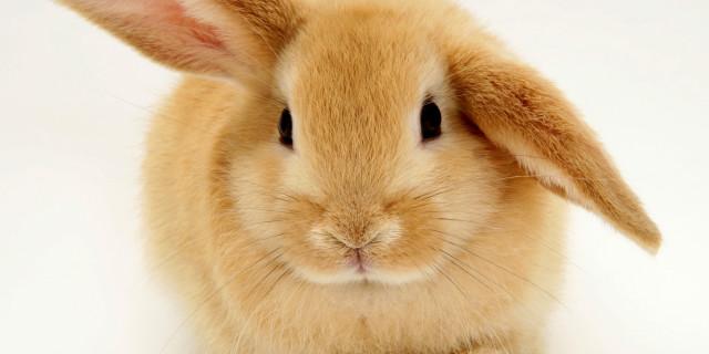 """Brambilla e gli Animalisti: """"2 Anni di Carcere per chi Mangia Carne di Coniglio"""""""