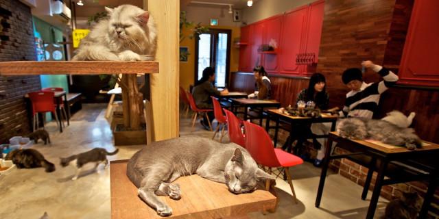 15 Bar per gli Amanti degli Animali in Italia e nel Mondo