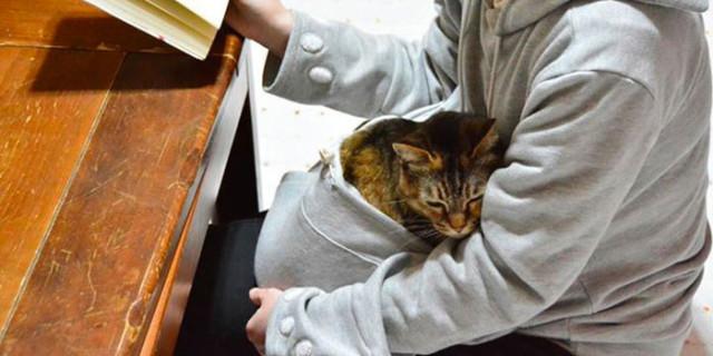 Mewgaroo: dove trovare la felpa con marsupio che i vostri gatti ameranno sicuramente