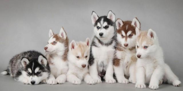 La Puppy Room: la Cura Migliore per Chi Si Sente Stressato