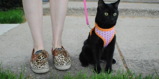 Perché Mettere il Guinzaglio al Gatto Potrebbe Essere una Buona Idea