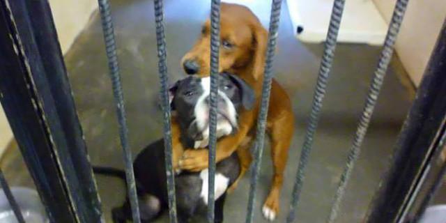 Due Cani si Abbracciano Prima di Essere Soppressi e Succede il Miracolo