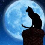 Luna Piena: ecco i possibili Effetti su Gatti e Cani