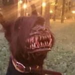 Questo Cane Terrorizza Tutti, Ma Non è Come Sembra... Ecco Perché