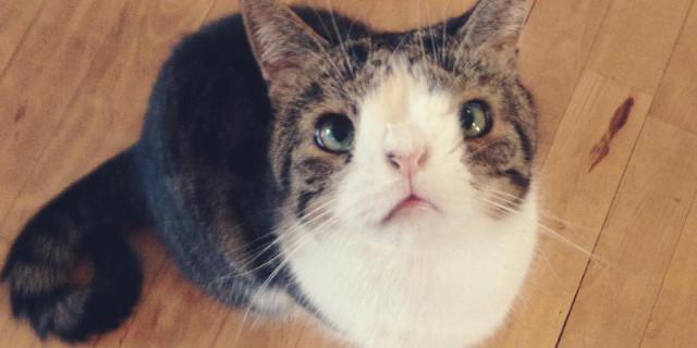 Monty, il Gatto Disabile che Nessuna Voleva. Ora è una Star del Web