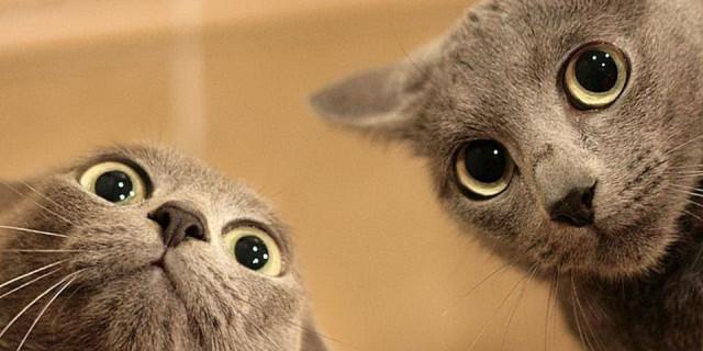 Ecco il Motivo per cui Amiamo Guardare i Video dei Gatti. Lo Spiega la Scienza