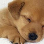 Cane in arrivo? Ecco i nomi per cani femmina e maschio più originali o... famosi