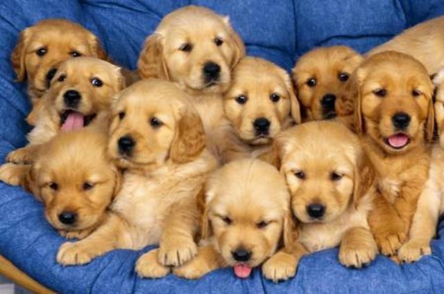 Nomi di cani femmina e maschio originali roba da donne