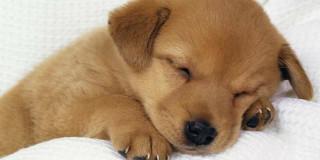 Nome da dare a un cucciolo