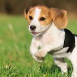 La Fidanzata gli Chiede di Scegliere tra Lei e il Cane: Ecco la Reazione