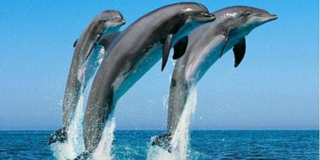 i delfini si chiamano per nome