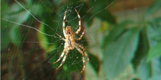 curiosità ragni