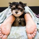 Dormire con Cani e Gatti fa Bene o Male? Ecco la Risposta della Scienza!