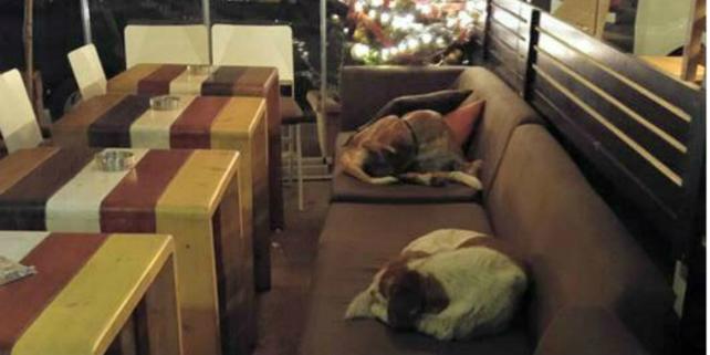 bar grecia apre ai cani