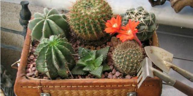 composizione di piante grasse