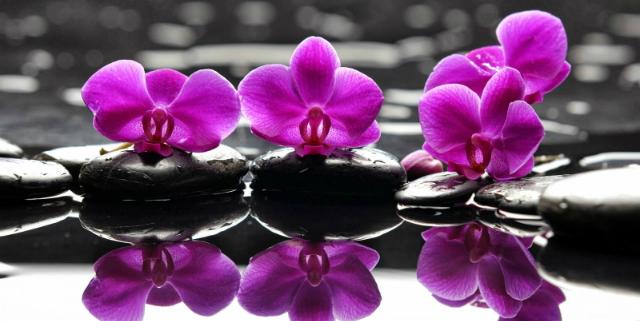 linguaggio dei fiori orchidea