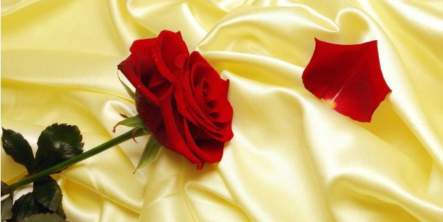 linguaggio dei fiori rose