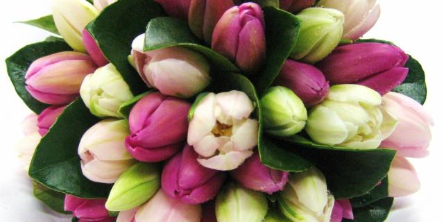 linguaggio dei fiori tulipano