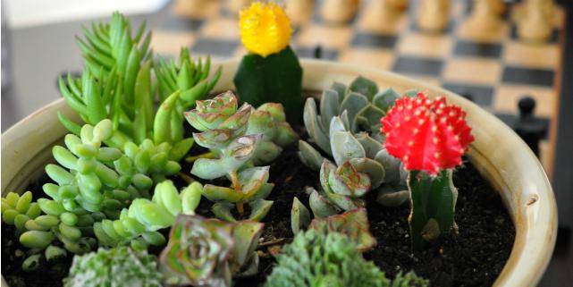piante grasse appartamento