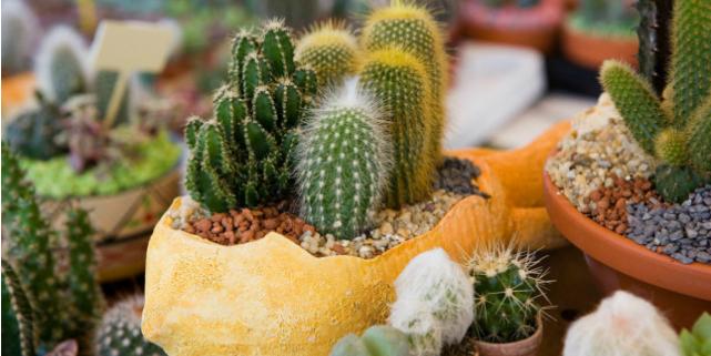 Piante grasse facili da curare roba da donne - Composizione piante grasse giardino ...