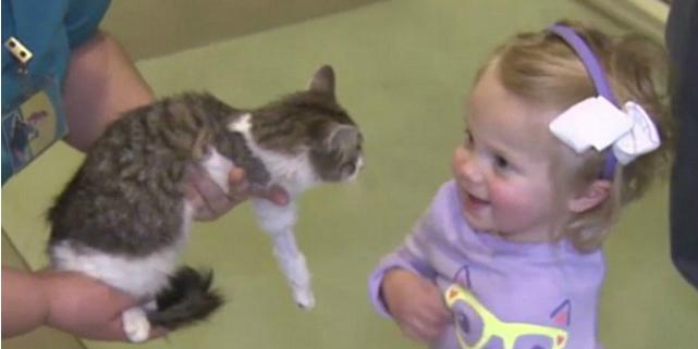 bambina gattino arti amputati