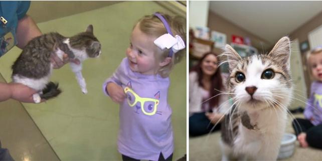 bimba amputata adotta gattino amputato