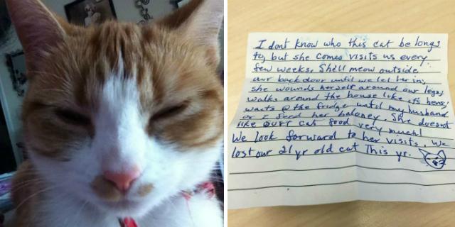 vita segreta gatto nala