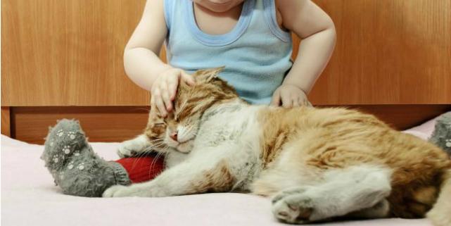 coccolare gatti