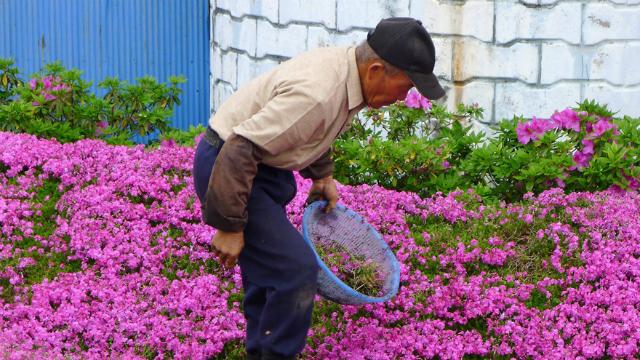 marito crea giardino per moglie cieca