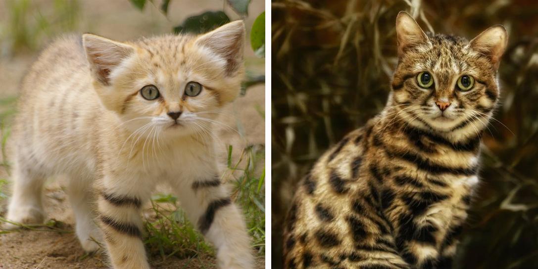 12 esemplari di gatto da evitare roba da donne - Cucina casalinga per gatti ...