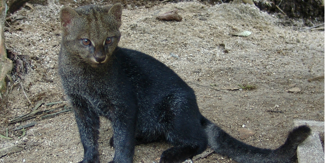 12 esemplari di gatto da evitare - Roba da Donne