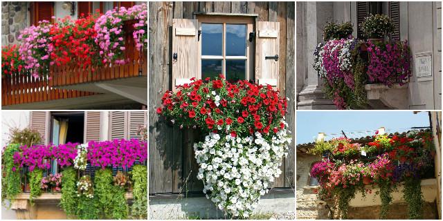 fiori da balcone creare uno spazio green roba da donne