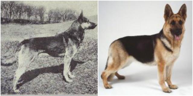 Cani: ecco come l'uomo li ha cambiati con il tempo!