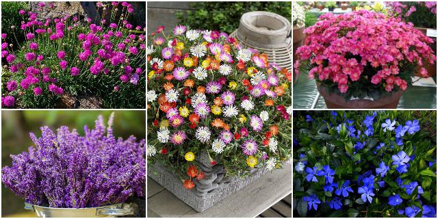 Fiori da balcone creare uno spazio green roba da donne for Fiori per giardino perenni