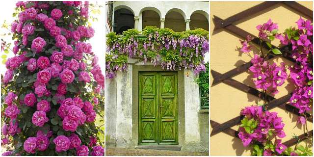 Fiori da balcone creare uno spazio green roba da donne for Piante rampicanti in vaso