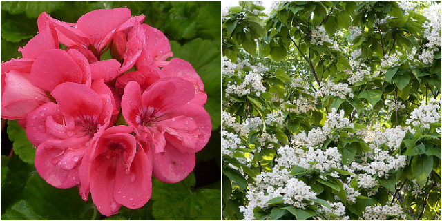 Piante da giardino contro le zanzare