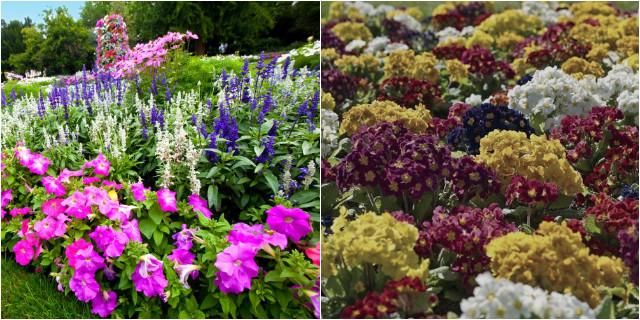 Piante da giardino i nostri consigli roba da donne for Piante fiorite perenni da esterno