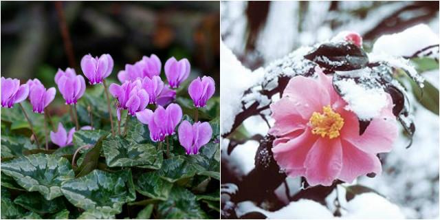 Piante da giardino invernali
