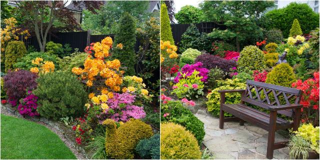 Piante da giardino sempreverdi