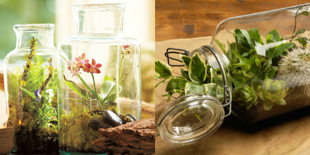 Composizioni floreali in vetro: il vostro giardino in miniatura