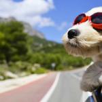 Viaggiare con un cane ora si può: dove andare e cosa fare