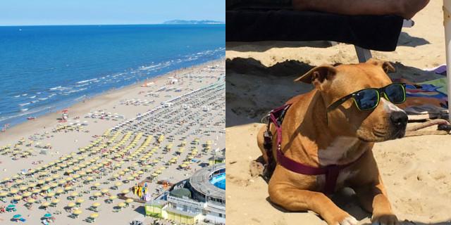 spiagge per cani in Emilia Romagna