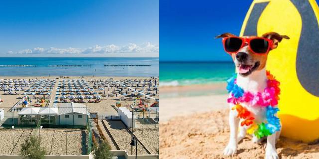 spiagge per cani nelle marche