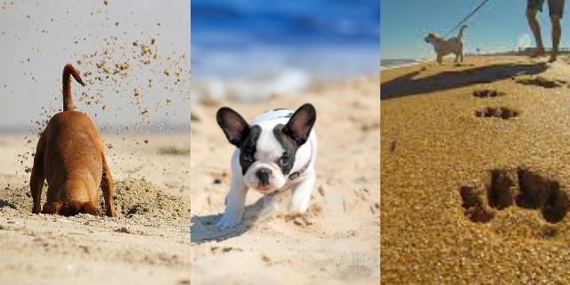 Spiagge per cani in Italia: sole, mare e tanto amore con il vostro amico a 4 zampe!